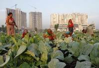 Climate change threatens Indian economy, food security: IPCC