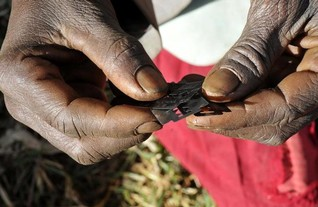 Sierra Leone urged to ban FGM after backing women's rights treaty