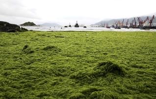 Scientists seek to harvest electricity from algae in green-energy effort