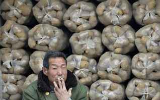Chinese potatoes to chip in as water shortages hit staple crops