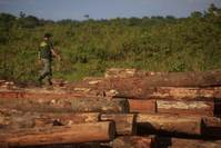 Brazil on right track for reducing deforestation rates - study