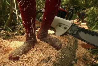 Indonesia loses up to $9 bln from timber clearing - anti-graft body