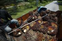Row erupts over magic number that could save forests from palm oil