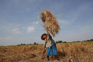 Myanmar farmers at risk of losing land under legal shift: think tank