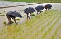 Number of starving worldwide drops below 800 mln - U.N.
