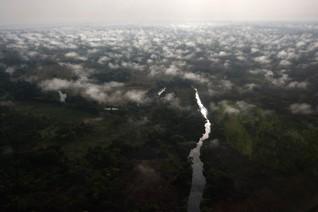 Logging companies plundering Congo's rainforest - report