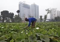 New UN development goals will drive nations