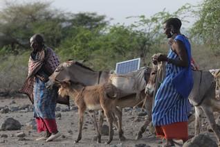 Toting panels on donkeys, Maasai women lead a solar revolution