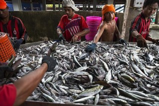 Thai traffickers exposed by campaign group investigating fishing industry
