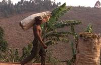 Finance to protect forests must meet local needs - experts