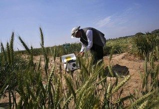 India turns to 'satellite god' for crop mapping