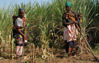 Mozambique agriculture plan could displace 100,000 farmers - activists