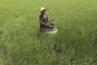 Scientists want 'rewilded' crops to boost agriculture
