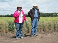 Advancing from tortillas to climate change resilient wheat