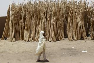 Niger meningitis epidemic has peaked, 545 dead - WHO says