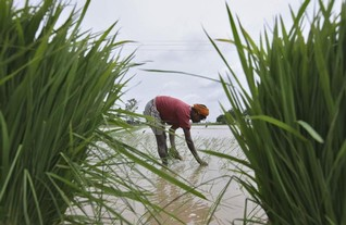 India to spend $8 bln to boost irrigation, reduce dependence on monsoon
