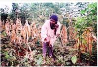 Mobile phones aid Cameroon farmers with prices, weather