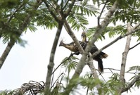 Ecuador halts environment deals with Germany over rainforest visit