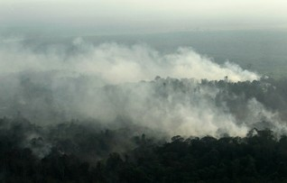 Less chance of Indonesian forest fire haze this year - officials
