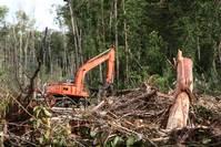 Indonesia extends logging moratorium, but questions remain