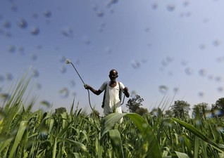 World food prices continue to fall in February - U.N. FAO