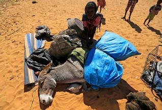 A girl removes belongings from a donkey after it fell onto its side upon arrival at the Zamzam IDP camp in North Darfur