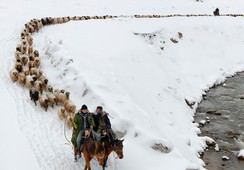 Kazakhs herd their sheep in Yili, Xinjiang Uighur Autonomous Region