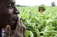 Zimbabwe farmers fear winter of hunger after poor tobacco crop