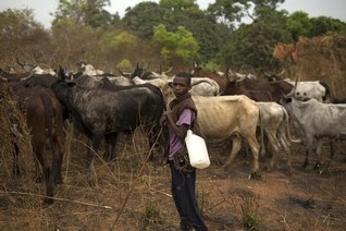 U.N. frees 21 herders enslaved by militia in C.African Republic