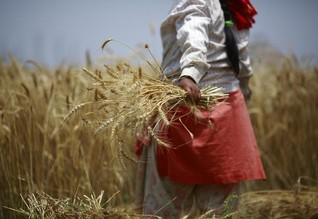 "Foreign ""land grabs"" redraw global map of farmland ownership"