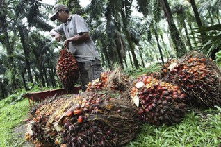 INSIGHT-Big palm oil's pledge to preserve forests vexes Indonesia