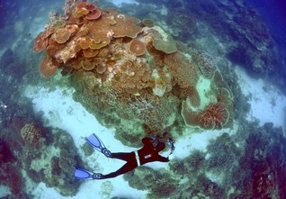 "Australia's Great Barrier Reef outlook poor but not ""in danger"" - UNESCO"