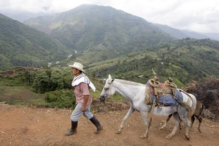 Colombia to launch voluntary carbon credit trading