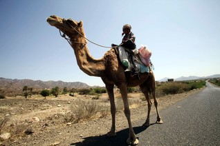 A boy rides his camel on the road in the Al-Wazia directorate of Yemen's southwestern city of Taiz